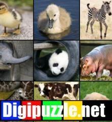dieren-jong-volwassen