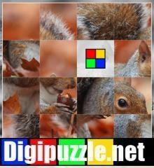 schuifpuzzel_eekhoorn