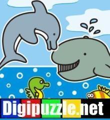 zomerverschillen-zeedieren