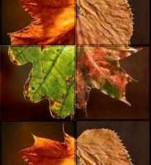 herfst-quiz