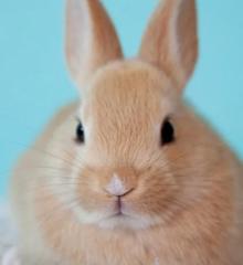 escape-room-konijnen-knaagdieren