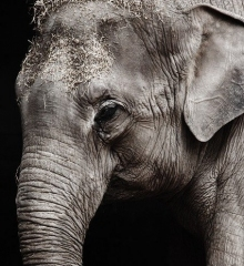 escape-room-olifanten