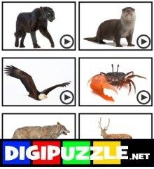 woord-scramble-dieren-spaans